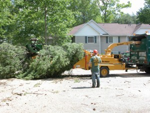 Residential Tree Services in Upstate NY & the Adirondacks