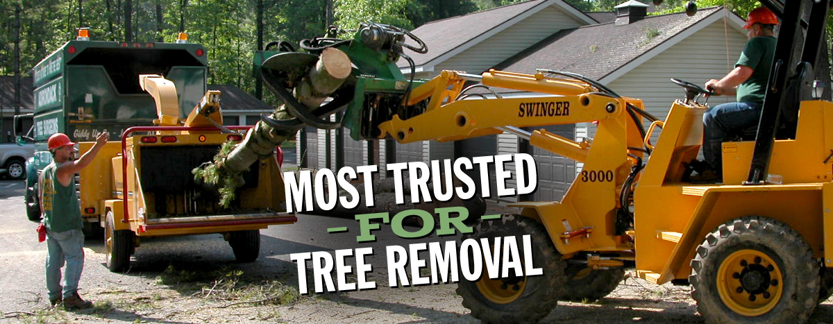 More Trusted for Tree Removal