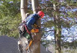 Residential Tree Service in Upstate NY & the Adirondacks