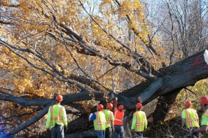 Adirondack Tree Surgeons Tree Removal Services in Upstate NY & The Adirondacks